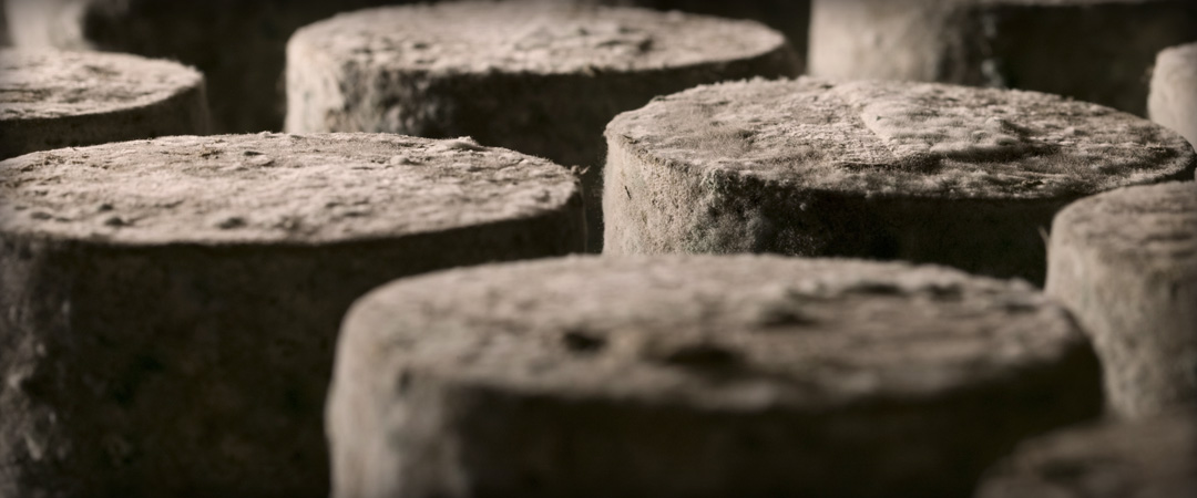 Thornby Moor Dairy - Cows-Milk-Cheese