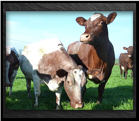Cows-milk-right-hand-box_v2