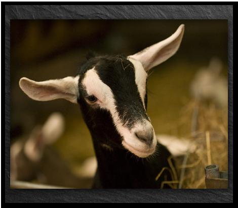 Goats-milk-right-hand-box_v2