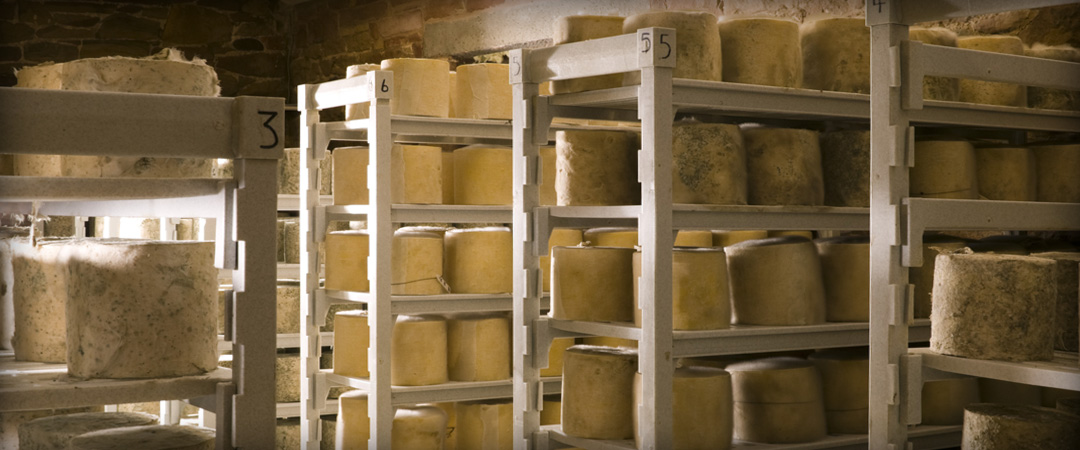 Thornby Moor Dairy - Our Cheeses